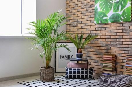 Areca Palm indoors to remove  moisture