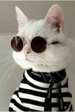 Cool cat with glasses wallpaper