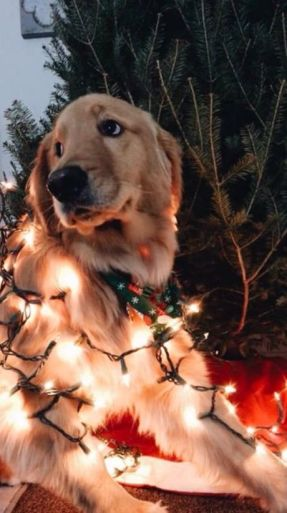 Cute puppy with Christmas lights