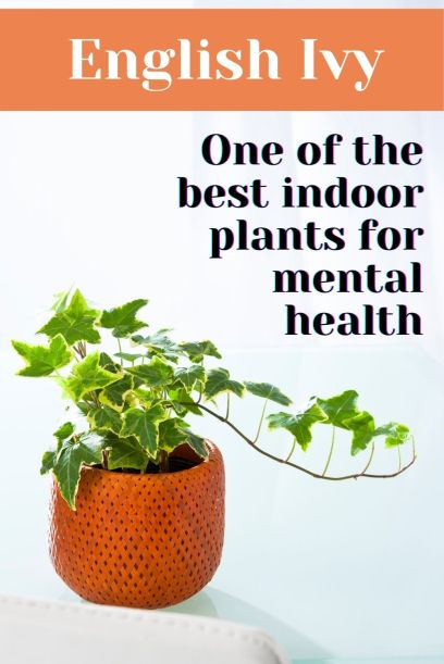 English Ivy one of the best indoor plants for mental health