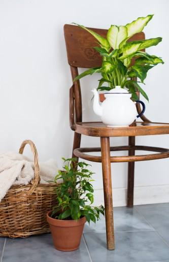 Golden photos  is another indoor plants to reduce humidity naturally all year round