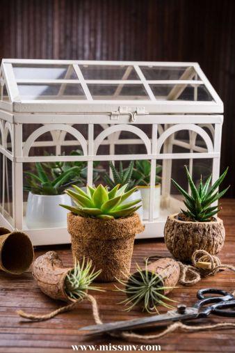Hanging Succulent Air Plant Terrarium that absorb bathroom moisture. Plants that absorb indoor moisture.