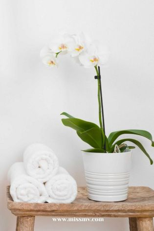 How orchids can balance the indoor moisture and keep the air fresh. Indoor orchids decor