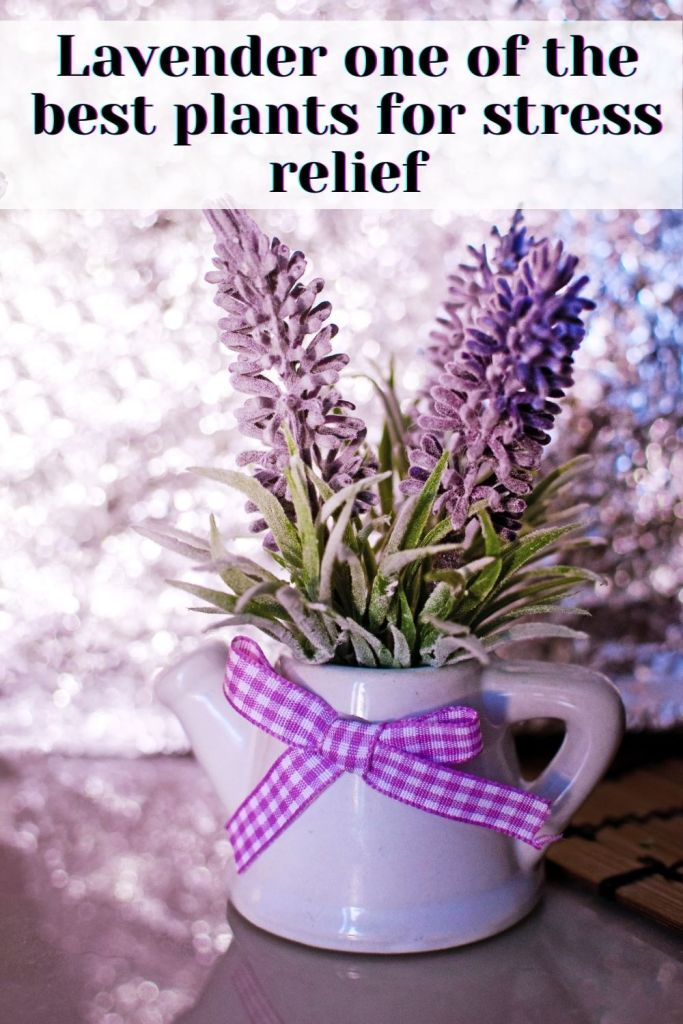 Lavender one of the best indoor plants for stress relief