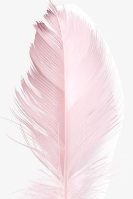 Pink feather iPhone wallpaper background