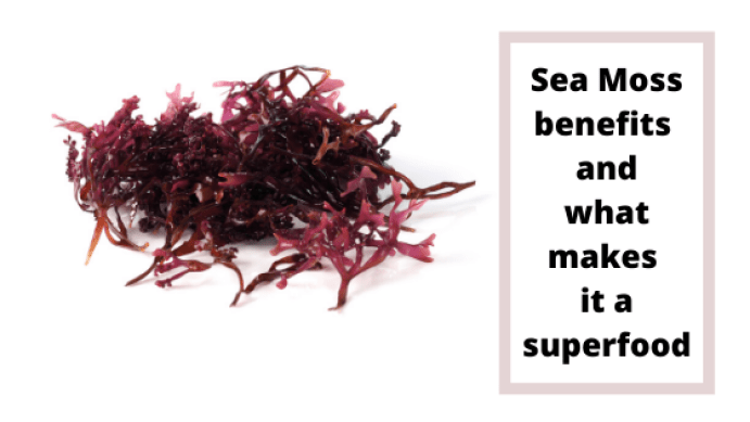 Sea moss benefits and how to use to improve your health