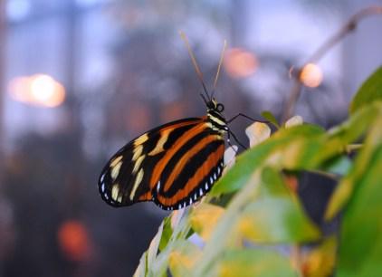MPM's butterfly habitat...