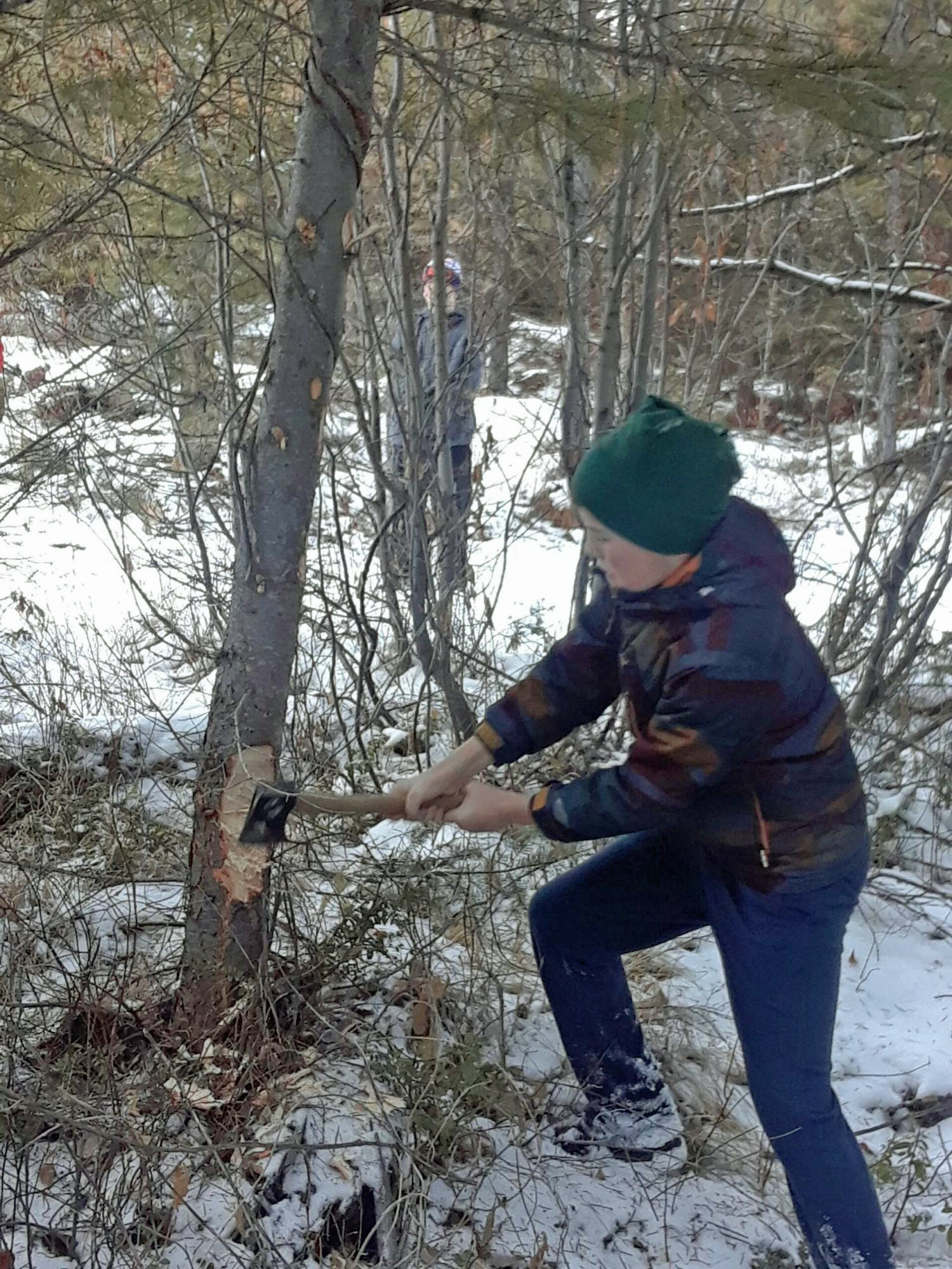 406dad - Cutting Your Christmas Tree