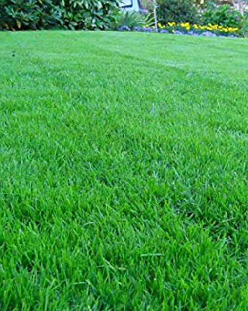Rockstar Kentucky Bluegrass