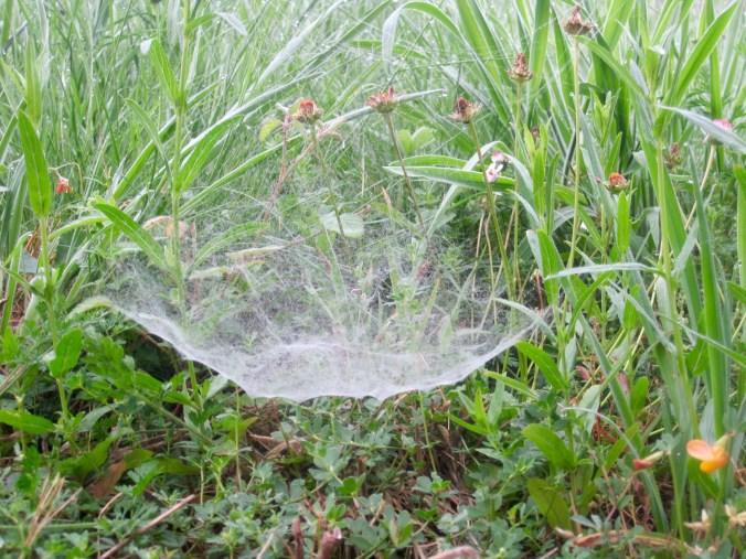 An unusual spider web