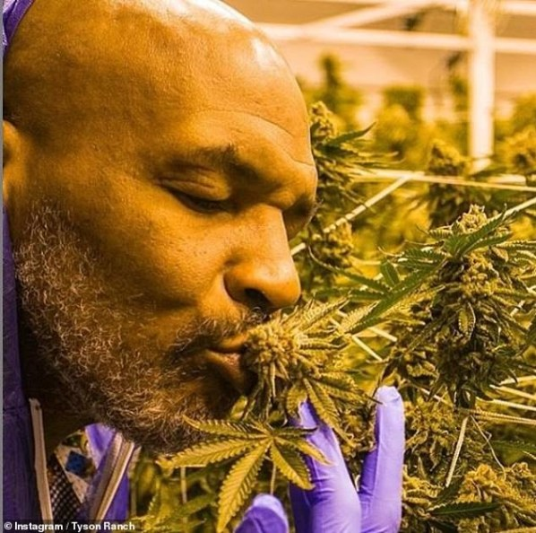 Mike Tyson Smokes ₦14m, Sells ₦181m Worth Of Weed Monthly At His Cannabis Ranch (Pictures)