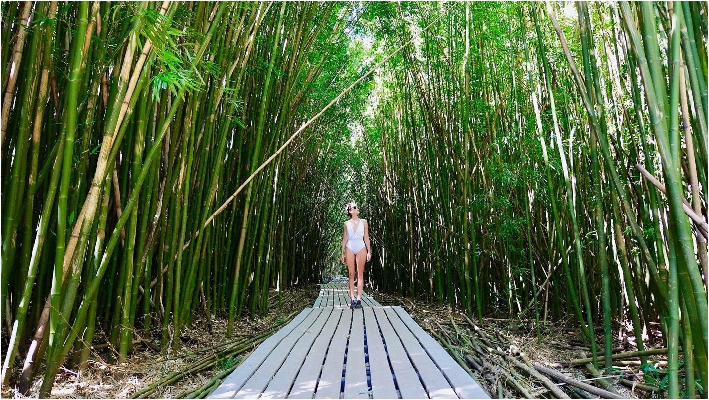 Pipiwaii Bamboo Forest