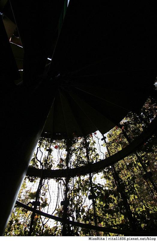 東京 好玩景點 三鶯之森吉力卜宮崎駿美術館 井之頭恩賜公園13
