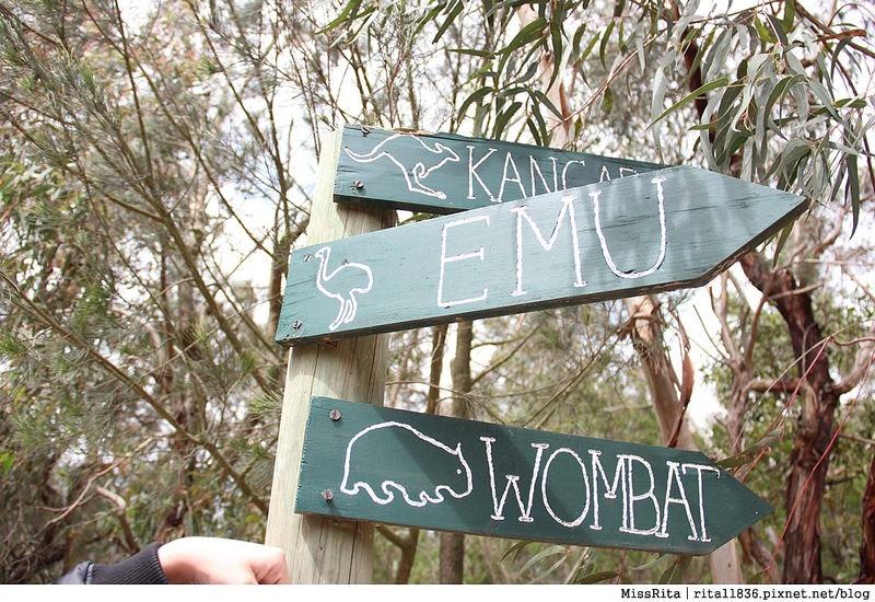 KKDAY 墨爾本自由行 melbourne gowesttours kkDAY墨爾本 墨爾本企鵝 澳洲自助 墨爾本自助 菲利浦島 菲利浦島交通 墨爾本必去 墨爾本酒莊 月光野生動物 Nobbies 墨爾本企鵝歸巢 墨爾本一日遊 菲利普島一日遊,小企鵝歸巢遊行46