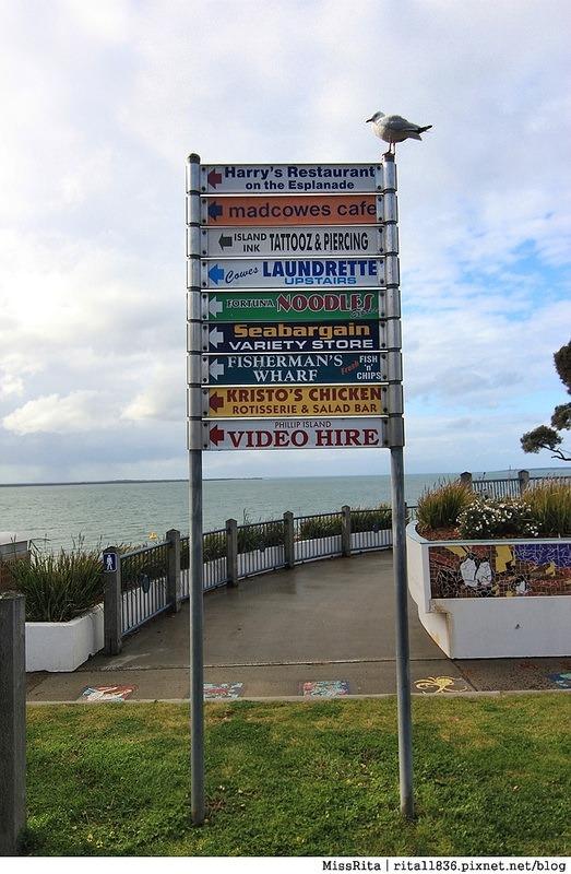 KKDAY 墨爾本自由行 melbourne gowesttours kkDAY墨爾本 墨爾本企鵝 澳洲自助 墨爾本自助 菲利浦島 菲利浦島交通 墨爾本必去 墨爾本酒莊 月光野生動物 Nobbies 墨爾本企鵝歸巢 墨爾本一日遊 菲利普島一日遊,小企鵝歸巢遊行80