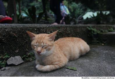 馬來西亞自由行 馬來西亞 沙巴 沙巴自由行 沙巴神山 神山公園 KinabaluPark Nabalu PORINGHOTSPRINGS 亞庇 波令溫泉 klook 客路 客路沙巴 客路自由行 客路沙巴行程77