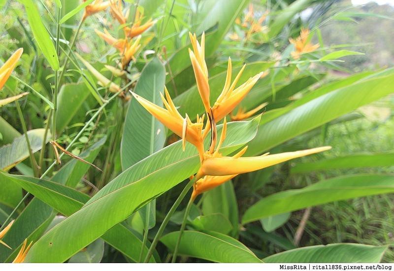 馬來西亞自由行 馬來西亞 沙巴 沙巴自由行 沙巴神山 神山公園 KinabaluPark Nabalu PORINGHOTSPRINGS 亞庇 波令溫泉 klook 客路 客路沙巴 客路自由行 客路沙巴行程45