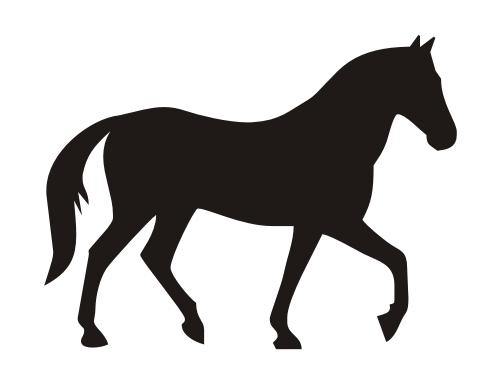 565 Pferd