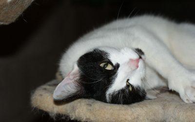 Obesidad en gatos | La enfermedad más frecuente
