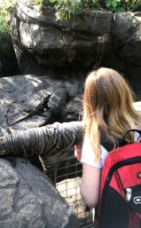 Checking out the zoo at Disney's Animal Kingdom