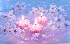Pink candles and Yoshino cherry blossom flowers floating on wate