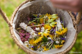 Foraging with Jo Barker