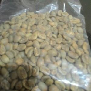 ARabika green bean- Mister Exportir