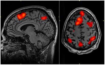 brain scan of working memory at work