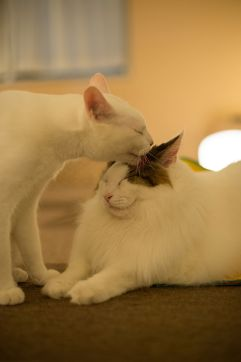 one cat licking another's face
