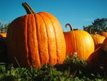 photo of pumpkins