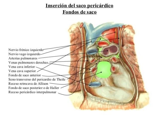 pericardio-2-638