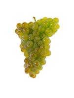 Trajadura Grapes