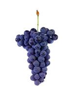 vinhao grapes