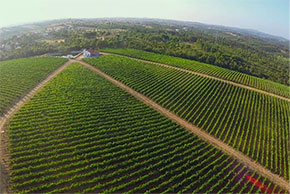 Vineyards Image