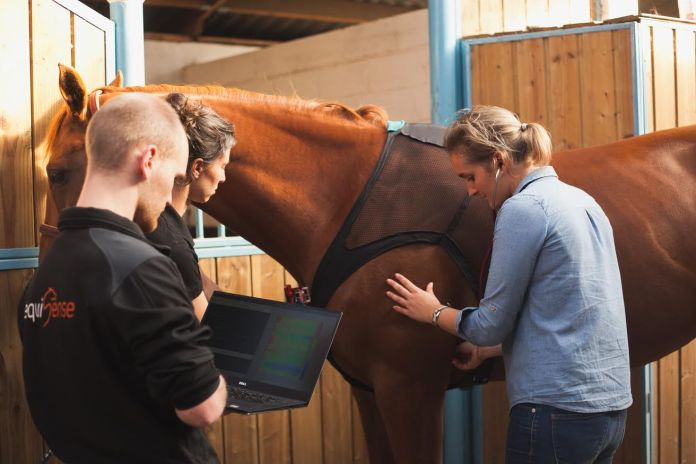 Equisense Care Body Connecte Cheval