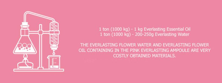 everlasting flower water and oil value