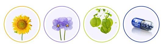 Sunflower seeds oil, Echium Plantagineum Seed Oil, Cardiospermum Halicacabum Flower, Panthenol