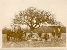 Harvestnormandy_1920s30s