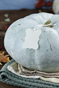 Thanksgiving holiday blue or teal colored pumpkin still life decoration with blank greeting card with copy space. Extreme shallow depth of field.