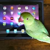 Bob working on his iPad