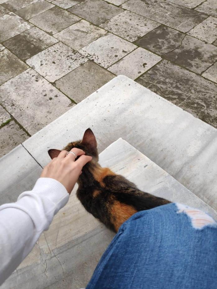 Gato en la Mezquita Süleymaniye Estambul