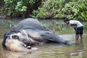 Bañando elefantes