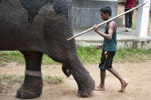 kandy-orfanato-elefantes