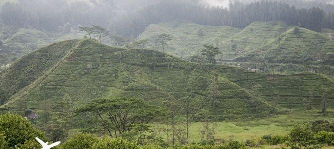 Haputale y las plantaciones de té en Sri lanka