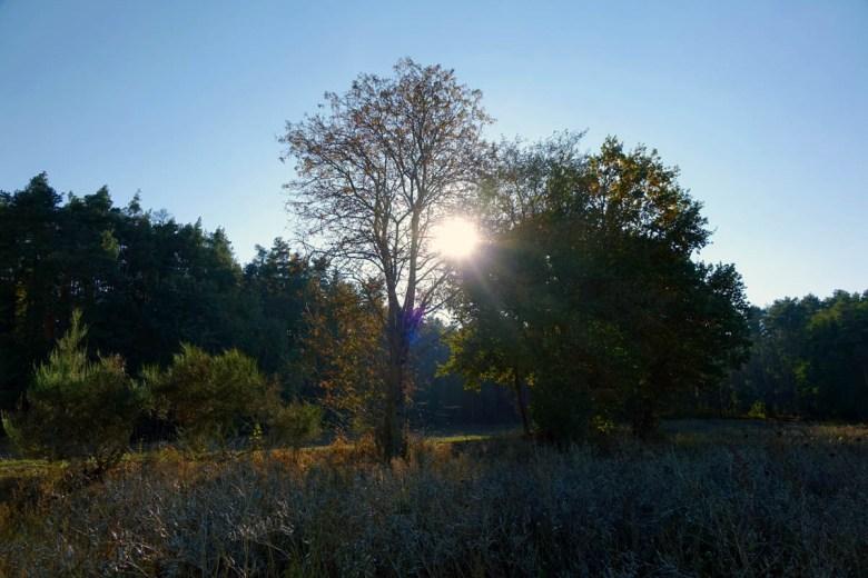Sonnenuntergang über dem Abenberger Wald auf dem Rundweg Aurau bei Büchenbach