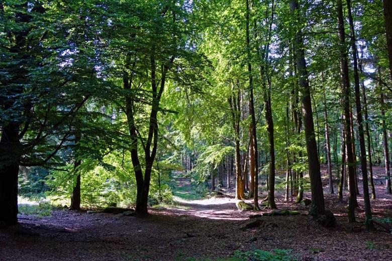Buchenwald auf dem Waldhistorischen Lehrpfad im Naturpark Steinwald