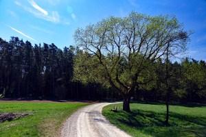Wanderweg Nr. 8 bei Hilpoltstein durch den Eibachgrund