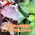 赤紫蘇と青紫蘇の違いは?食べるならどっちが体に良いの?