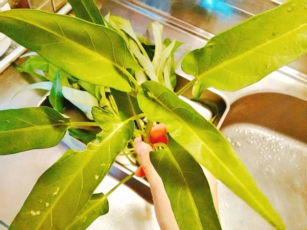 空芯菜の葉