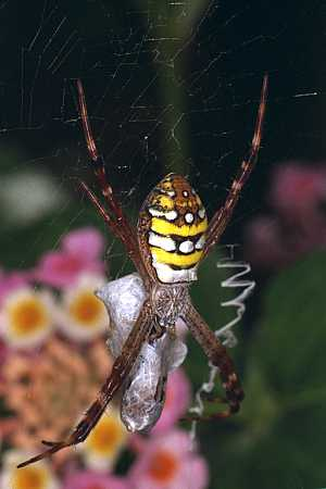 An innocent spider -- when will the massacre end?